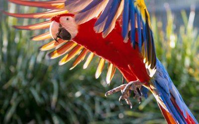 Maleny Botanic and Bird World